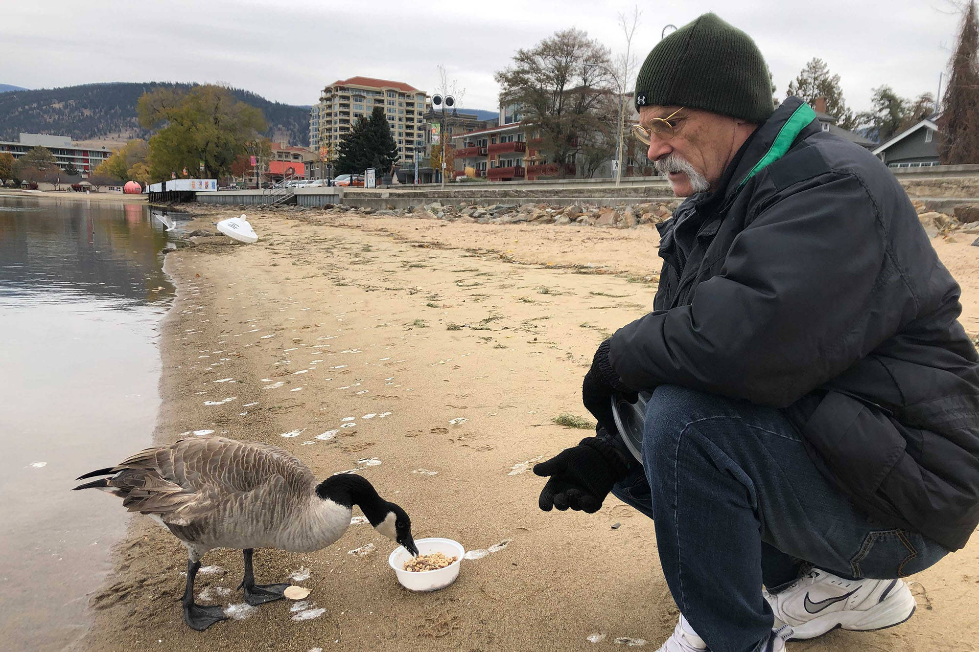Dave Chuokalos has been trying to rescue his feathered friend - Kevin the goose - before the ice sets on Okanagan Lake. So far, Kevin has evaded capture. (Monique Tamminga - Western News)